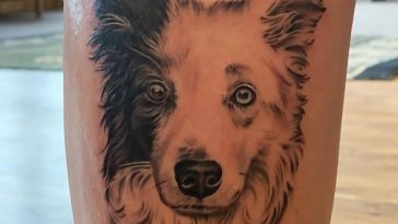 border collie tattoo