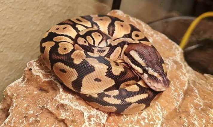Pet Snake Names