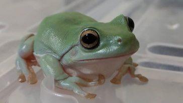 pet frog names