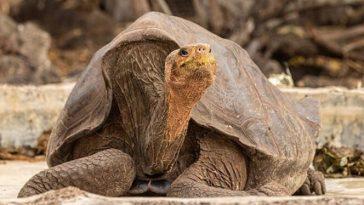 tortoise names