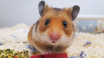 best hamster names