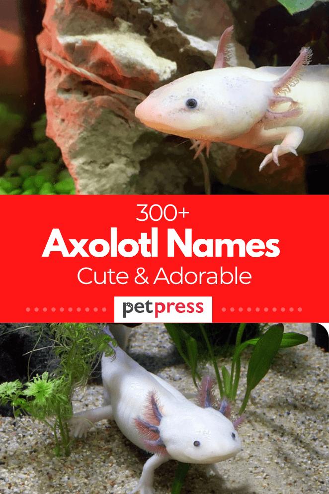 Axolotl-names
