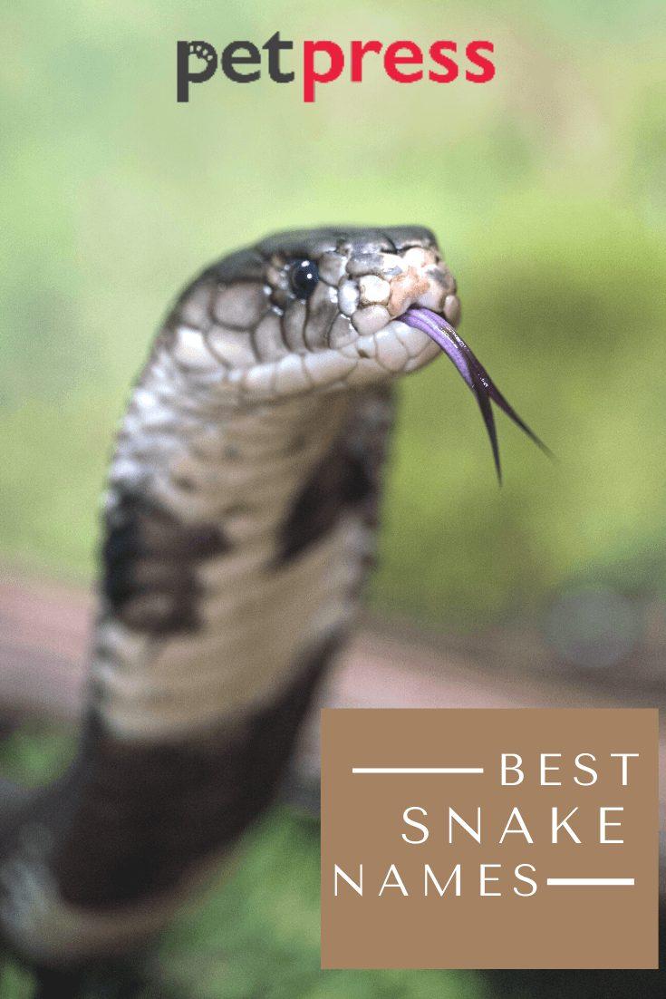 Best-snake-names