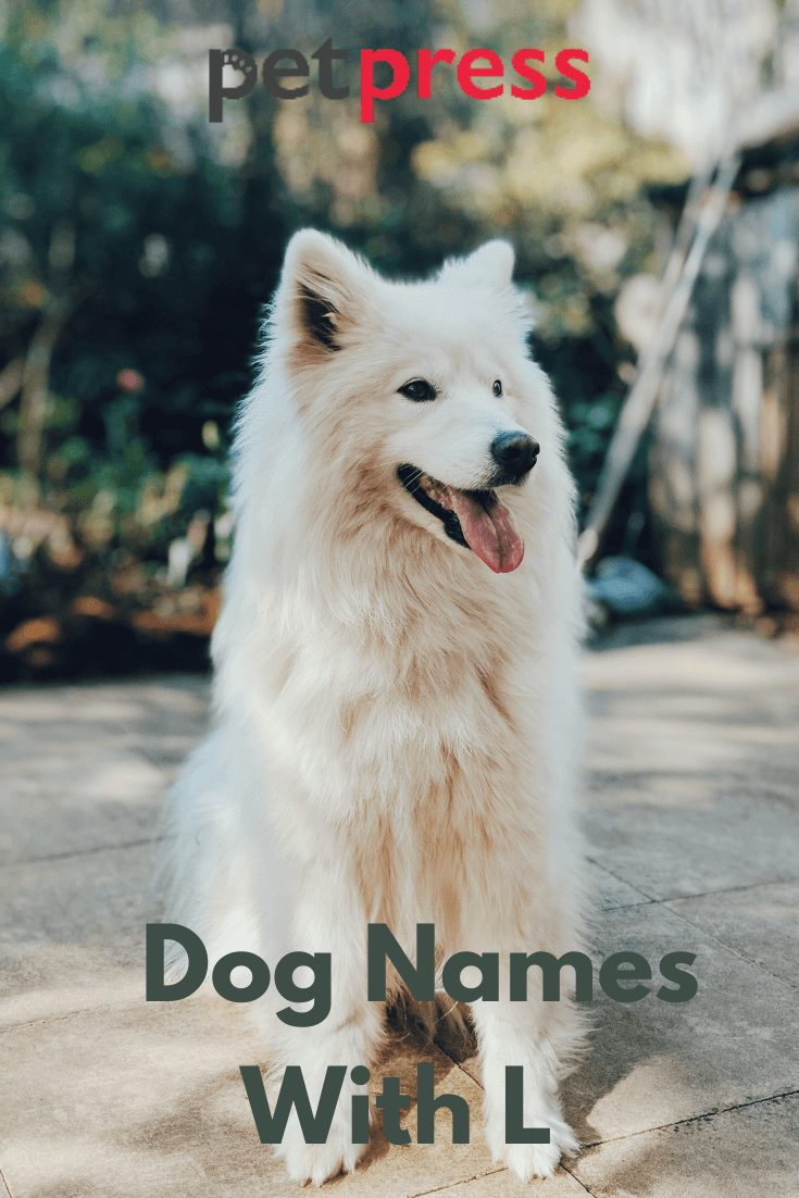 Dog Names with L