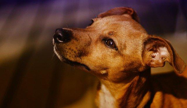 male-dog-names