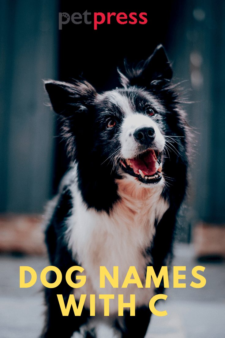 Dog Names with C