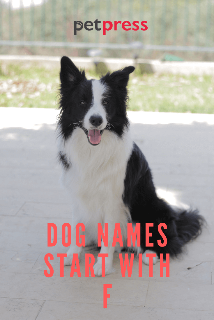 dog-names-start-with-F