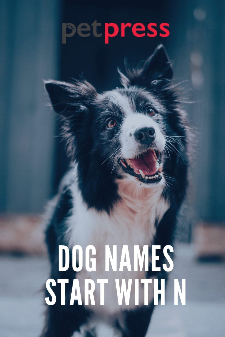 Dog Names Start With N