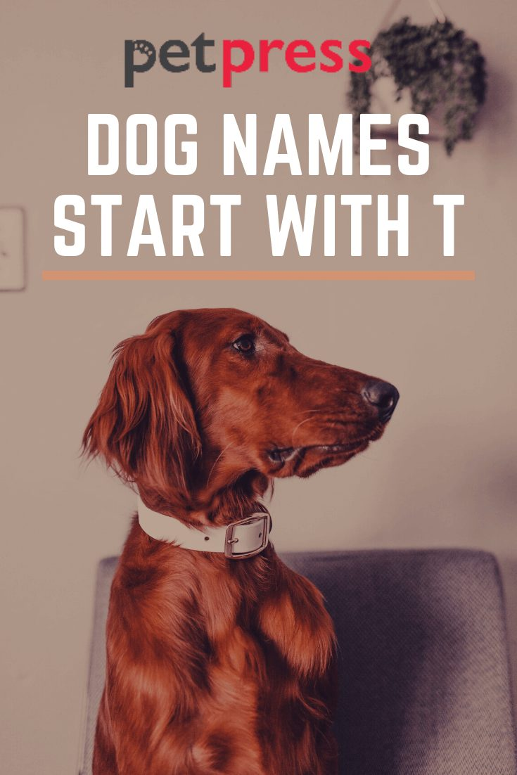 Dog Names Start With T