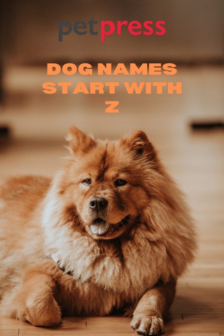Dog Names Start With J