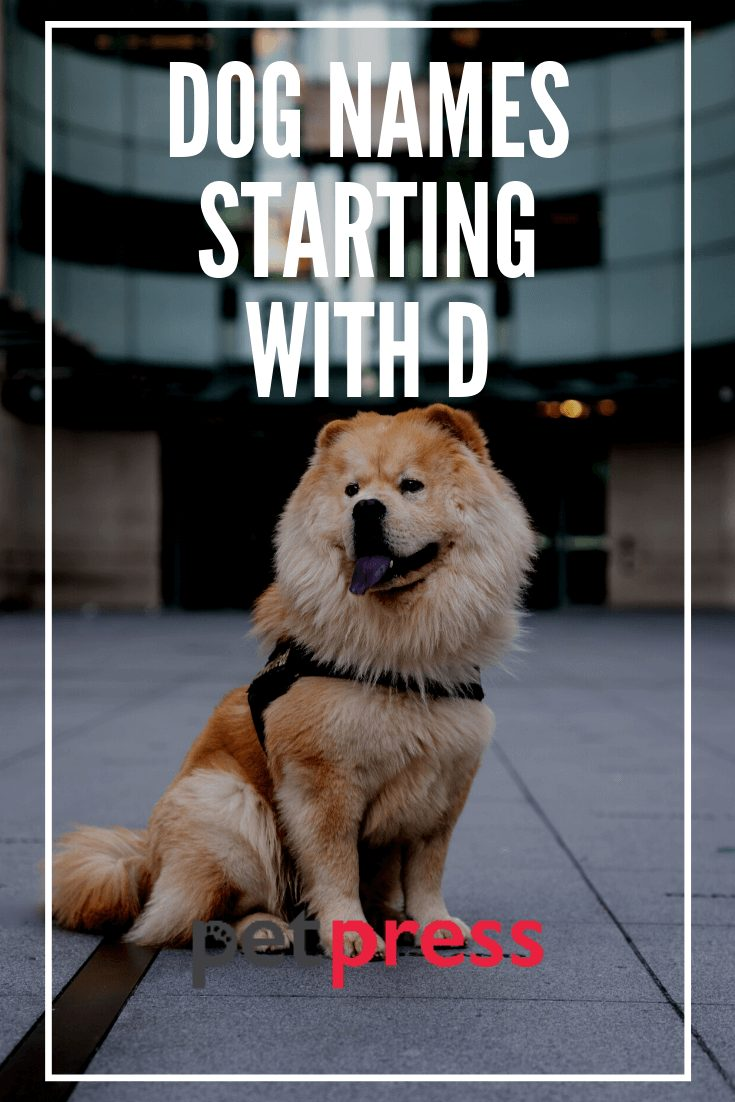 Dog Names Starting With D