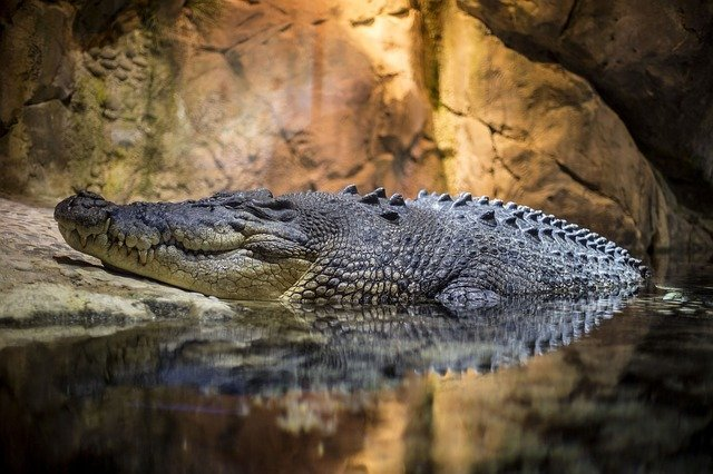 good-crocodile