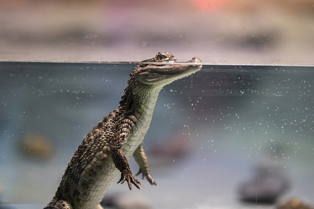 cute-crocodile