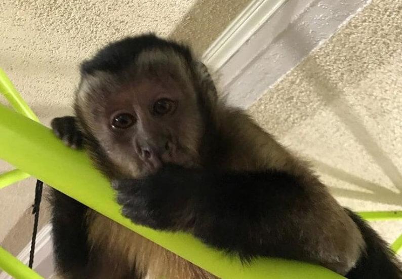 200 Best Monkey Names That Are Cute For Boy Girl Monkeys