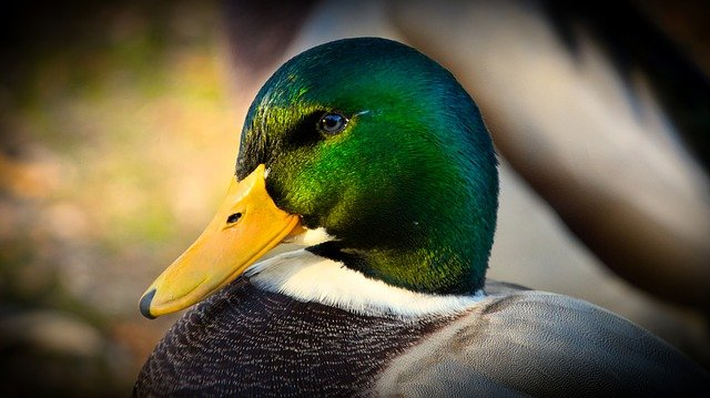 cool-duck-names