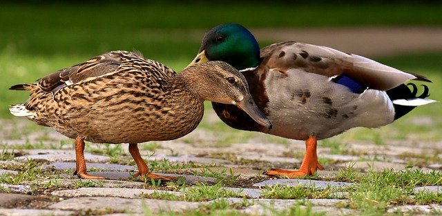 pairs-duck-names