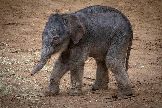 baby-boy-elephant-names