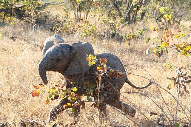 baby-girl-elephant-names
