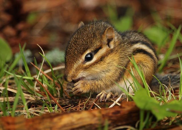 baby-chipmunk-names