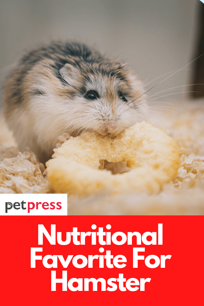 nutritional-for-hamster