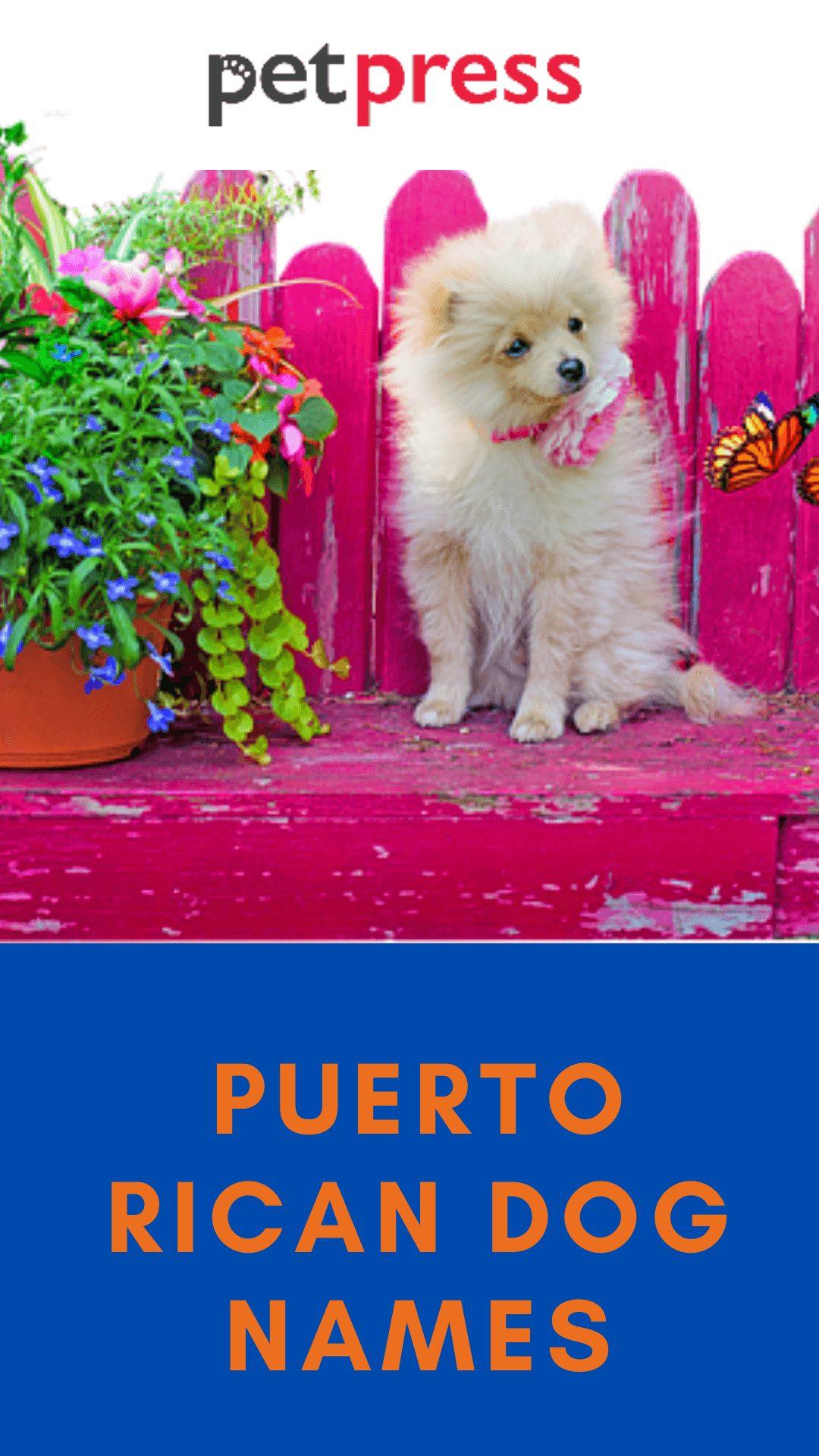 puerto-rican-dog-names