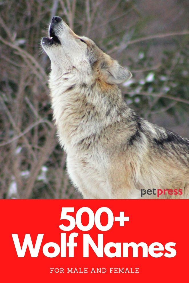 wolf names for both male and female