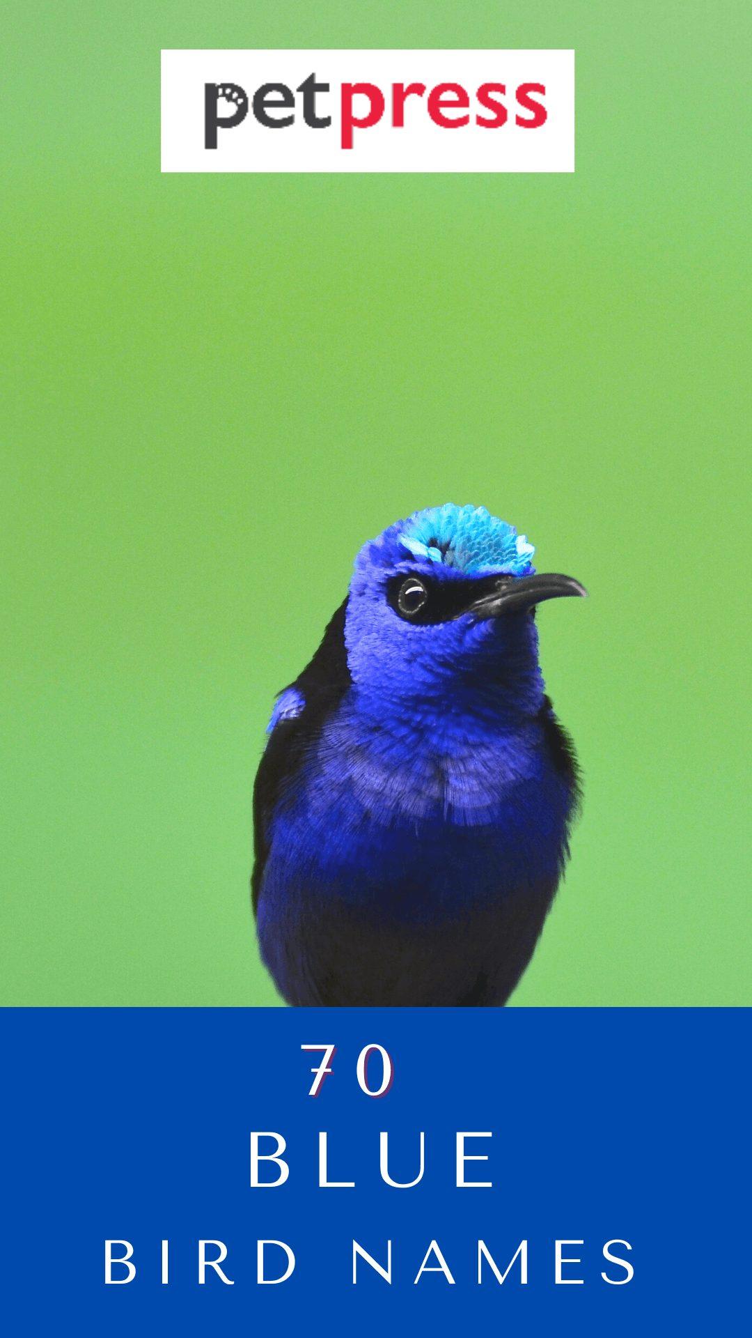 blue-bird-names