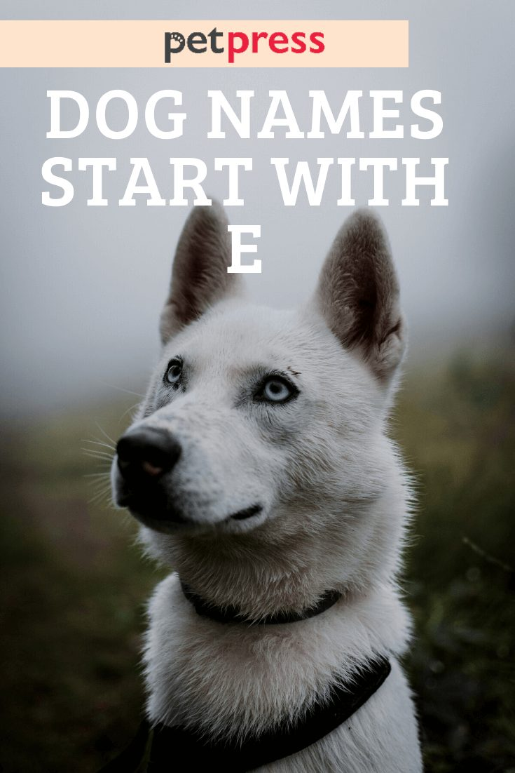 dog names start wtih e