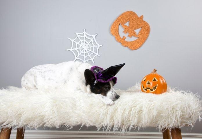 10 Best Halloween-themed Dog Names