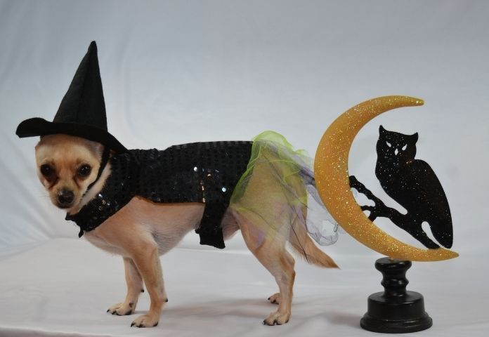 Unisex Halloween Dog Names