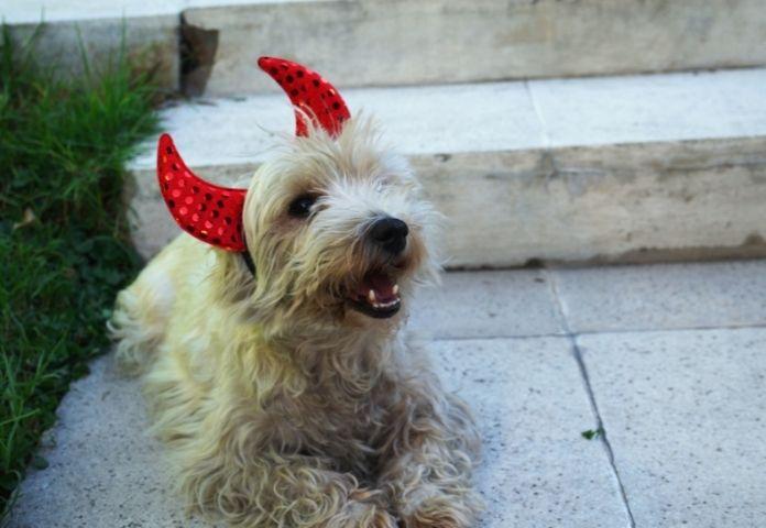 More options for Halloween dog names