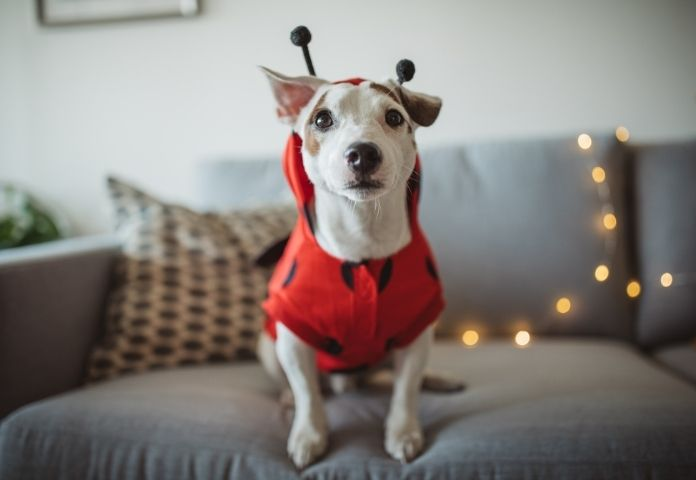 The Best 200+ Halloween-inspired Names for Dogs
