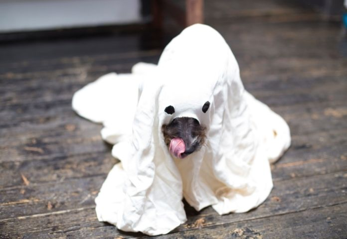 Halloween Names for Female Dogs