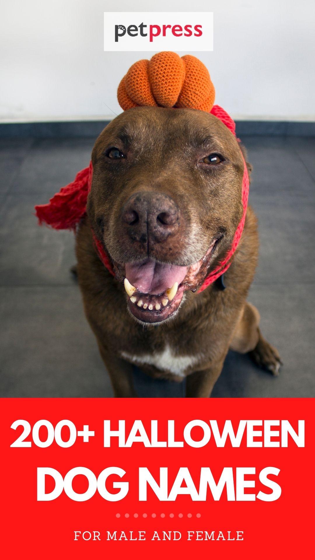halloween dog names