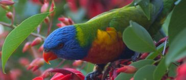 best parrot names for a pet parrot
