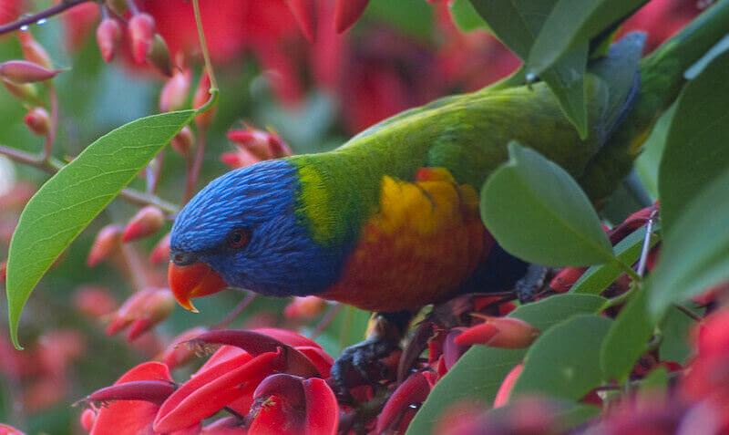 best parrot names for a pet parrot