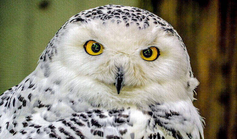 47+ Baby names that means owl information