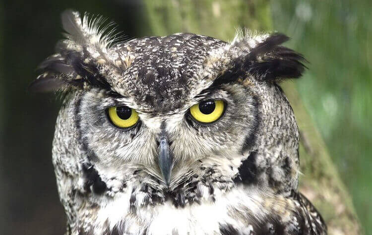 44+ Strong male owl names information