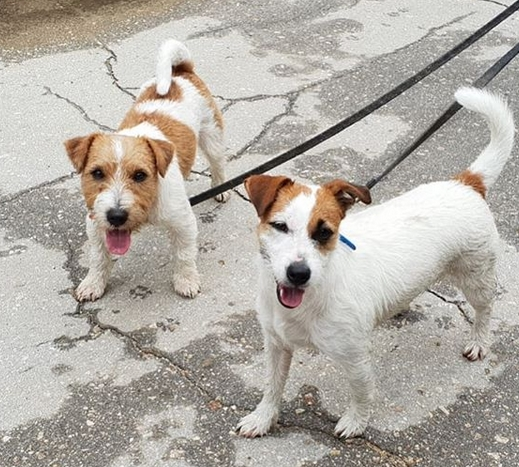 Over 200 Great Twin Dog Name Ideas
