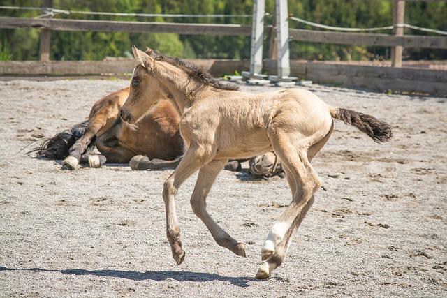 baby-girl-pony
