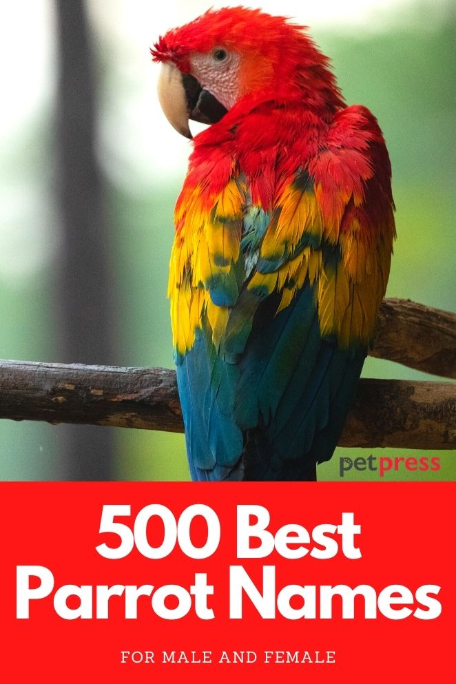 Best parrot names for a male or female parrot