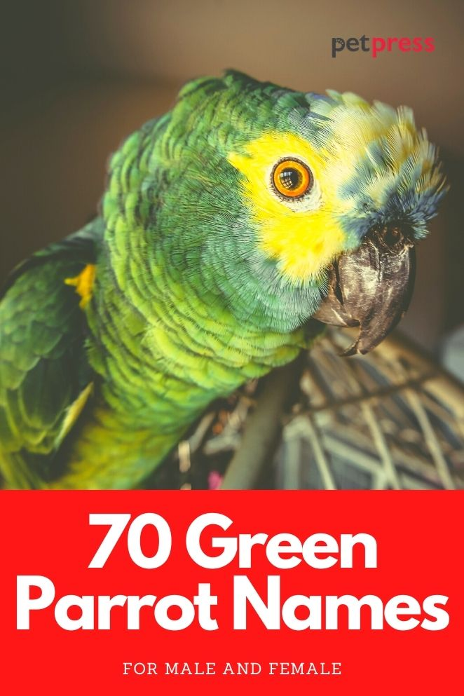 green parrot names for a green parrot