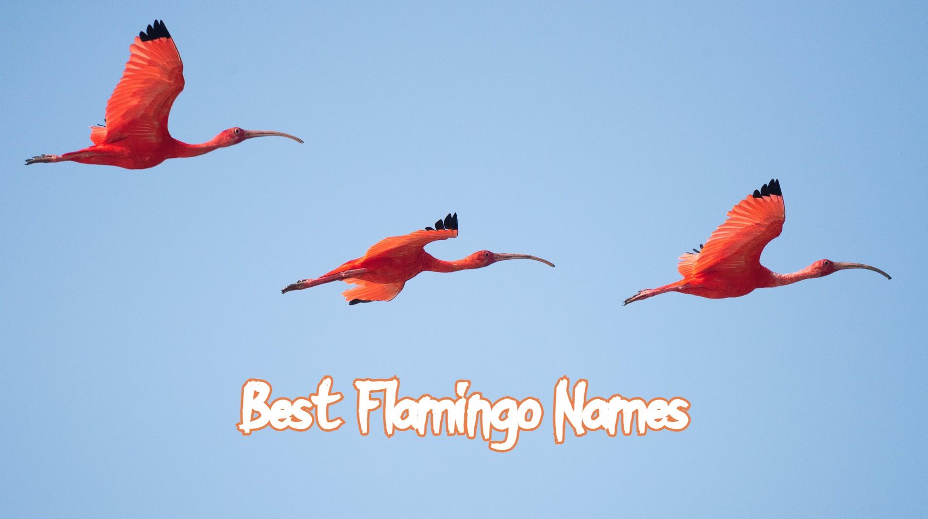 best-flamingo-names