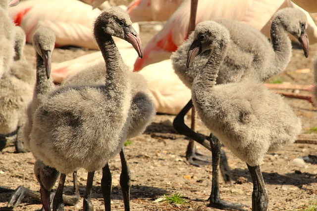 baby-flamingo-names