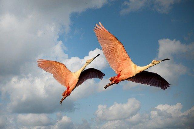 flamingo-nicknames