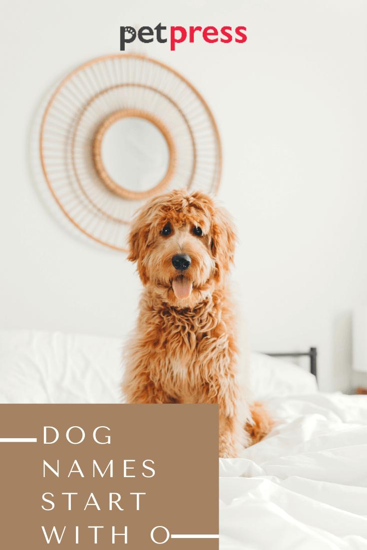 dog-names-start-with-O