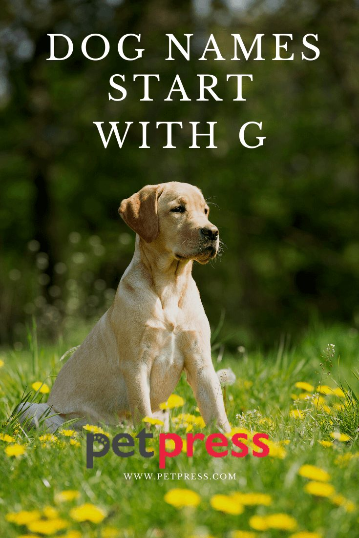 dog-names-start-with-G