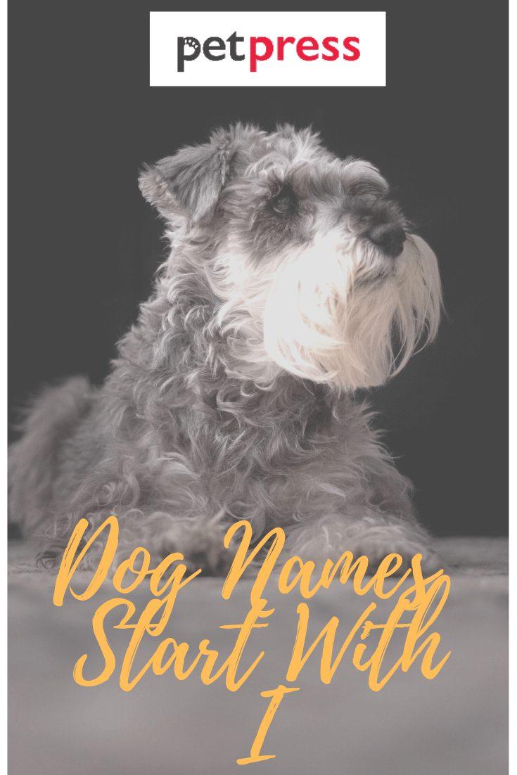 dog-names-start-with-I