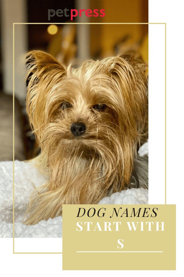 dog names start wtih s