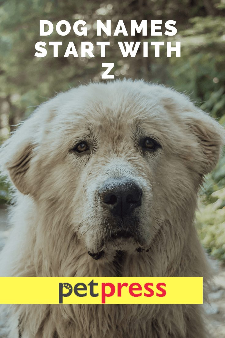 Dog Names Start With Z
